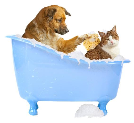 Can You Use Dog Shampoo On Cats