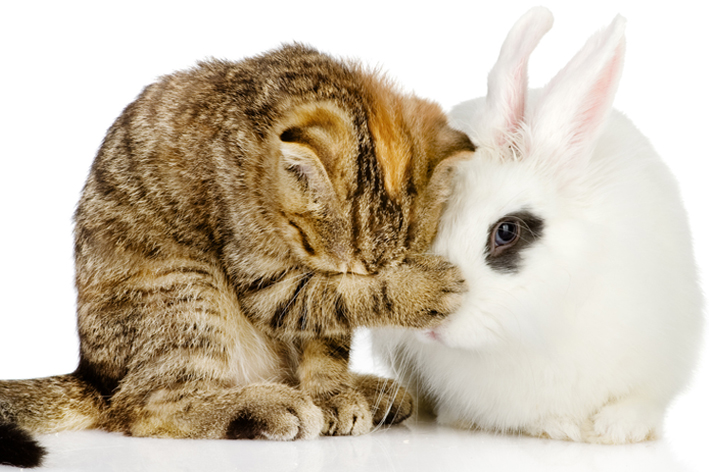 Image of a kitty and bunny rabbit